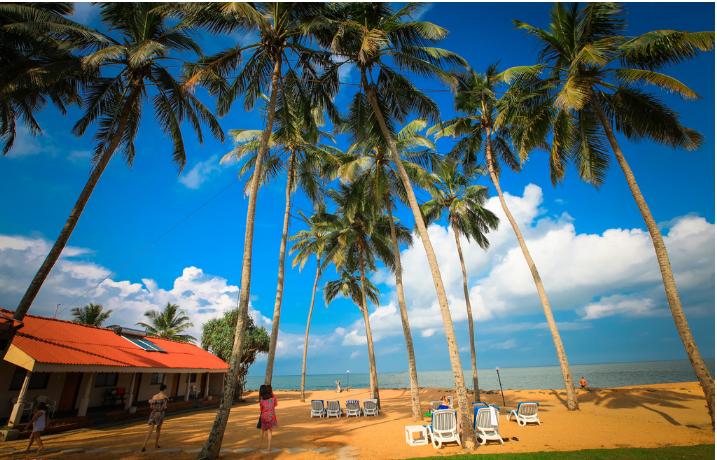 Sri lanka is abundant with coir